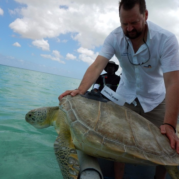 Princess Yachts' volunteer releasing giant turtle back into the ocean